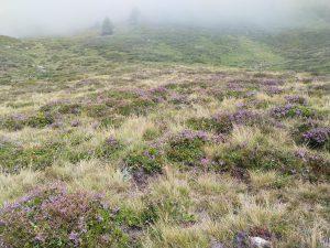 Panoramaweg im Nebel